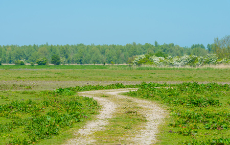 Path through wetland in spring Stock Photo