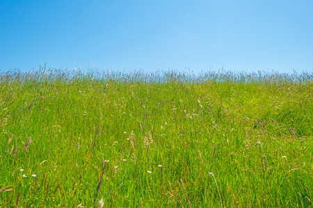 Green meadow on a dike below a blue sky