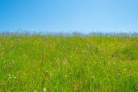 Groene weide op een dijk onder een blauwe hemel Stockfoto