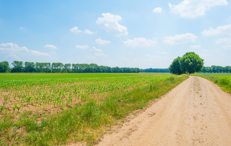 Road through the countryside in springtime Stock Photo - 79463118