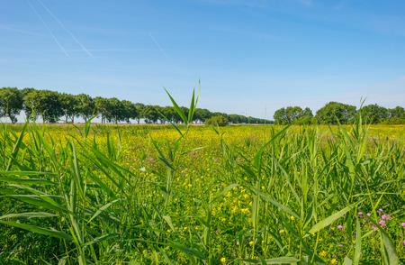 Yellow wild flowers in a field in summer