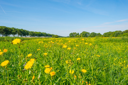 Trees and wildflowers in a field in summer Stock Photo