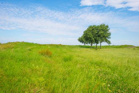 Trees in a field in summer