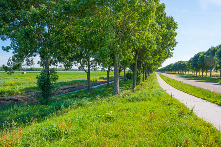 Road in a rural landscape in summer