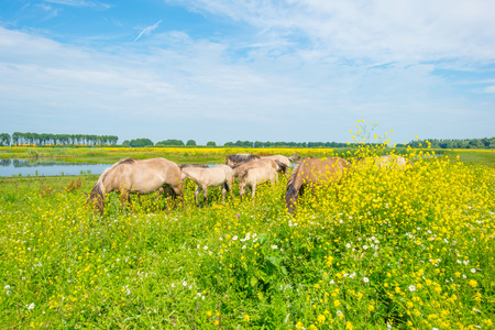 Feral horses along the shore of a lake in summer