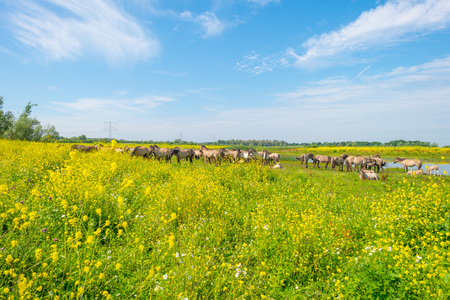 feral: Feral horses along the shore of a lake in summer