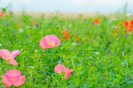 Flowers blooming in a field in sunlight in summer