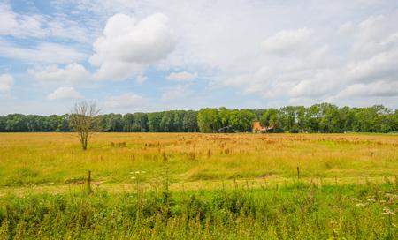 Meadow below a blue cloudy sky in summer