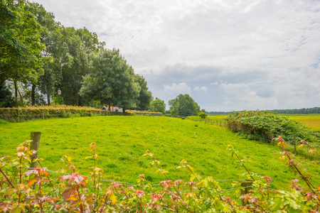 Reclaimed: Green meadow below a blue cloudy sky in summer