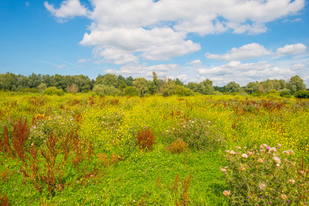 Field in wetland with wildflowers in sunlight in summer Stock Photo