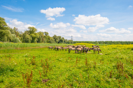 feral: Feral horses along the shore of a lake in sunlight in summer Stock Photo