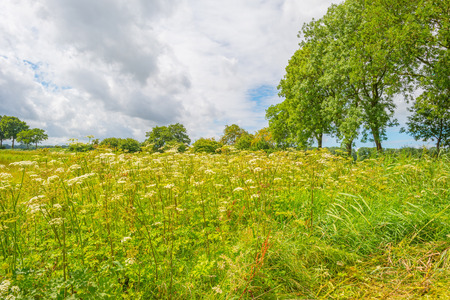 Field below a blue cloudy sky in summer