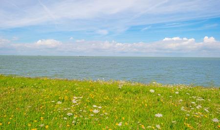 Bloemen die op een dijk langs een meer in de zomer groeien Stockfoto - 83239757