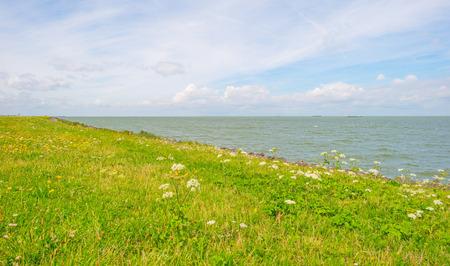 Bloemen die op een dijk langs een meer in de zomer groeien Stockfoto