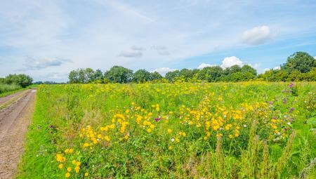Wild flowers in a field in sunlight in summer