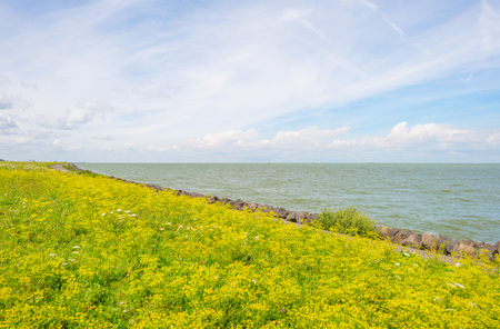 markermeer: Flowers growing on a dike along a lake in summer Stock Photo