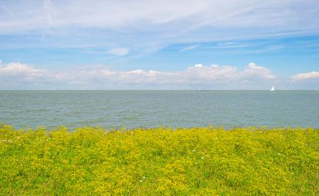 Bloemen die op een dijk langs een meer in de zomer groeien Stockfoto - 83223642