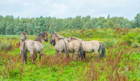 feral: Feral horses in sunlight in a field in summer Stock Photo
