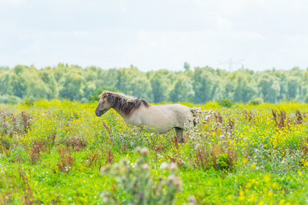 Feral horses in sunlight in a field in summer Stock Photo