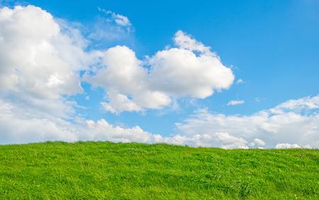 Green dike below a blue cloudy sky in sunlight in summer