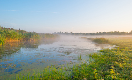 Shore of a misty lake at sunrise in summer Stock Photo