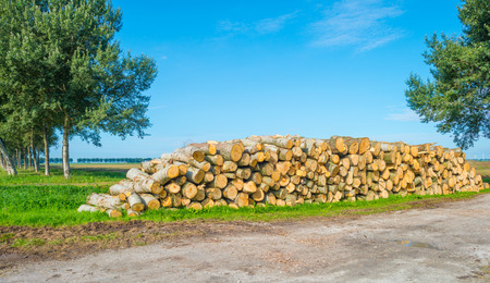 Stack of timber in a field in sunlight in summer