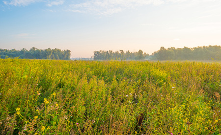 Field with wild flowers in the light of sunrise in summer Stock Photo
