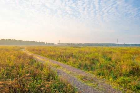 Path through a misty field at sunrise in summer Stock Photo