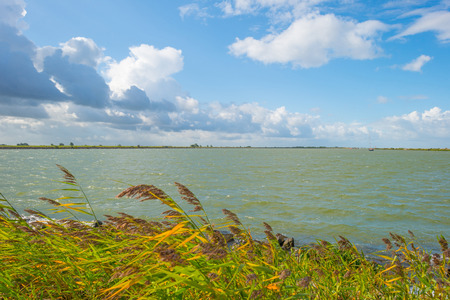 Duik langs de oevers van een stormachtig meer in zonlicht in de zomer Stockfoto - 85805358