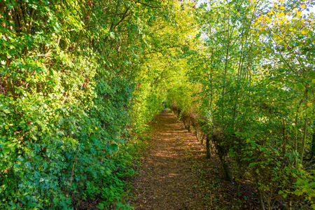 Path through a forest in autumn colors in sunlight to fall Stock Photo