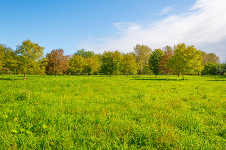 Trees in a sunny field below a blue cloudy sky in autumn