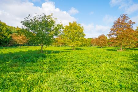 below: Trees in a sunny field below a blue cloudy sky in autumn