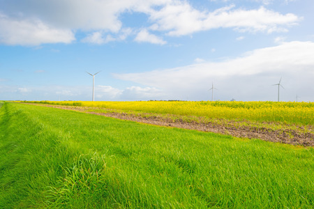 Sunlit field with yellow rapeseed below a blue cloudy sky Stock Photo