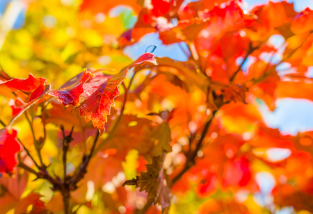 Autumn leaf colors in a garden in sunlight to fall