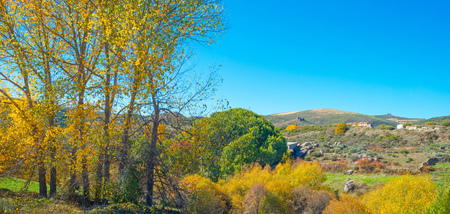 Trees with yellow autumn leaves in a spanish hilly landscape in sunlight