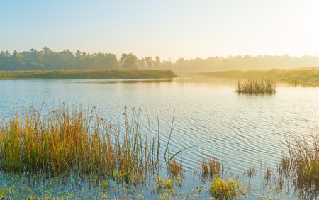 Shore of a misty lake at sunrise in autumn Stock Photo