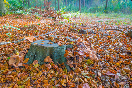 Mushrooms in a forest in autumn