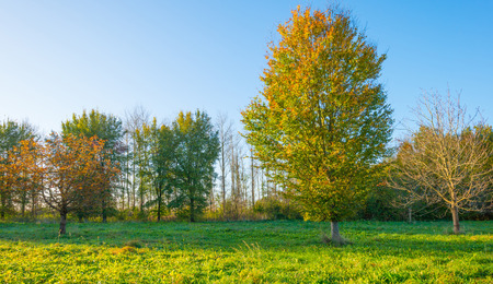 Trees in autumn leaf colors in a field in sunlight to fall