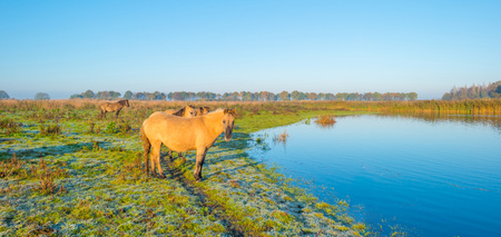 edge: Horses along the edge of a foggy pond at sunrise in autumn Stock Photo