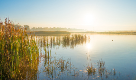 Reed along the shore of a foggy lake at sunrise in autumn