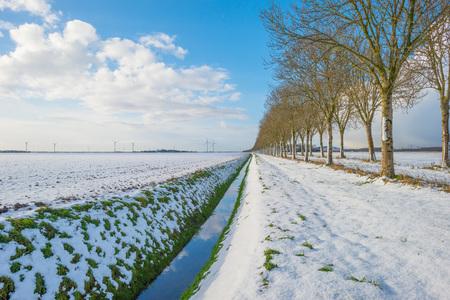 Trees in a snowy field in sunlight in winter