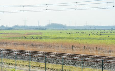 Herd of deer in a natural park along a railway in winter