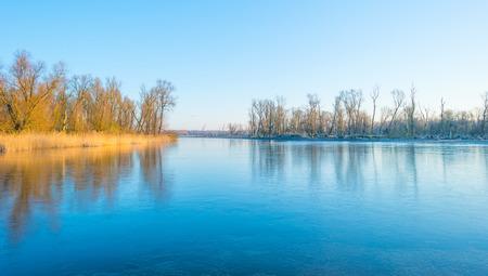 Reed in a field along a frozen lake in winter