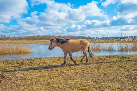 Horse in a field on a frozen lake in winter Imagens