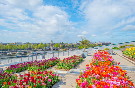 City center of Amsterdam viewed from a roof garden with tulips in sunlight in spring