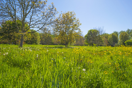 Trees and wild flowers in a field and forest in sunlight in spring