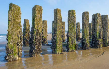 Groyne on a beach in sunlight in spring protecting land from sea Stock Photo