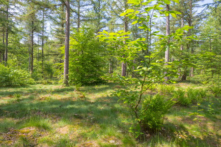 Clearing in a forest in sunlight in spring