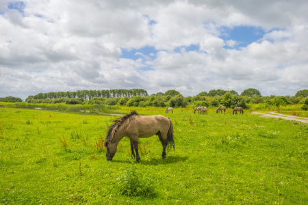 Horse in field with wild flowers in summer