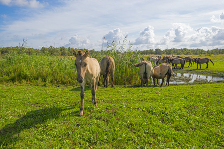 Horses in a meadow with wild flowers in sunlight in summer